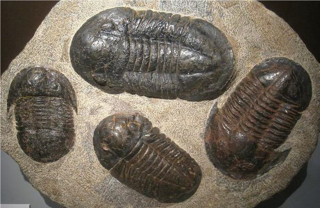 Fossils: Clues to the Past - Ages 5-12
