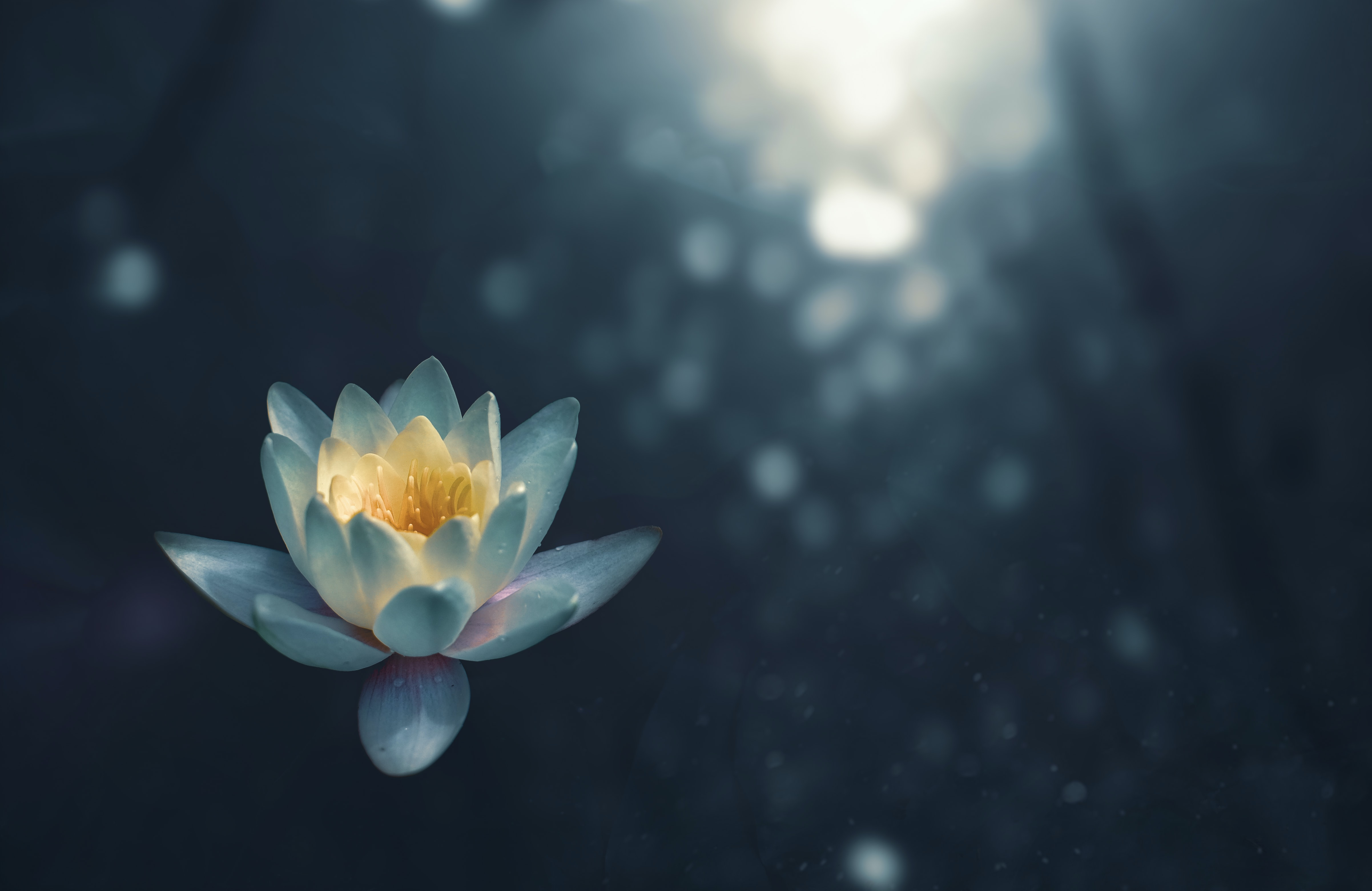 Overcoming Stress and Anxiety Through Meditation