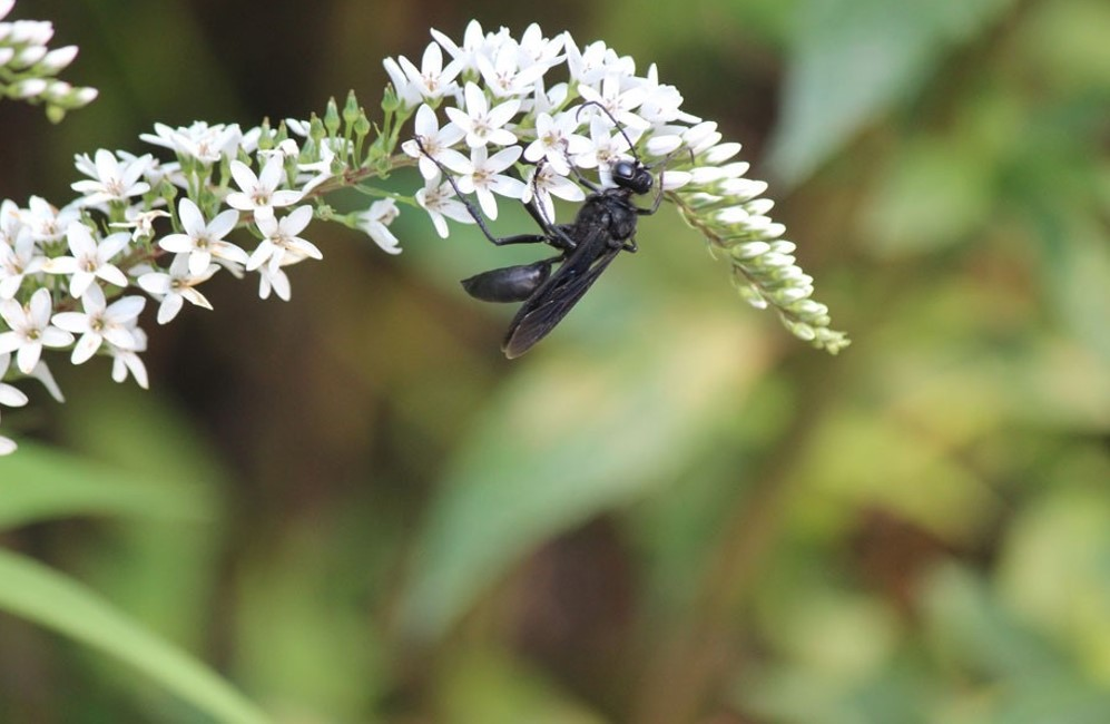 Creating a Pollinator Friendly Garden with Native Plants