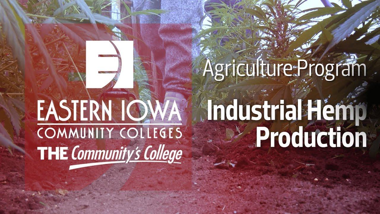 Industrial Hemp in Iowa