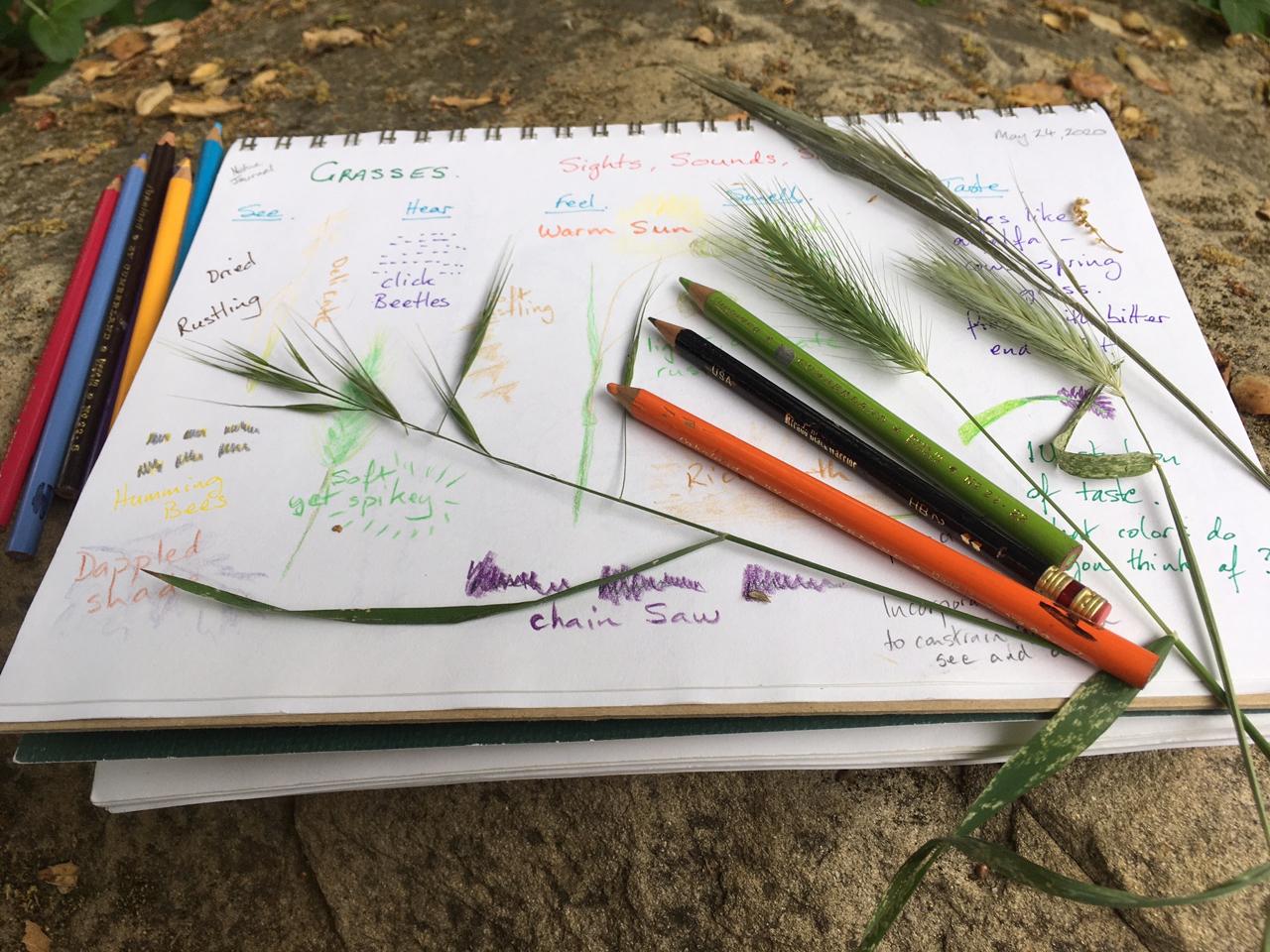 Nature Journaling: Journaling at Felton Nature Discovery Park (recording)