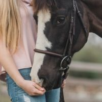 All About Equine Evac @ Boulder Creek