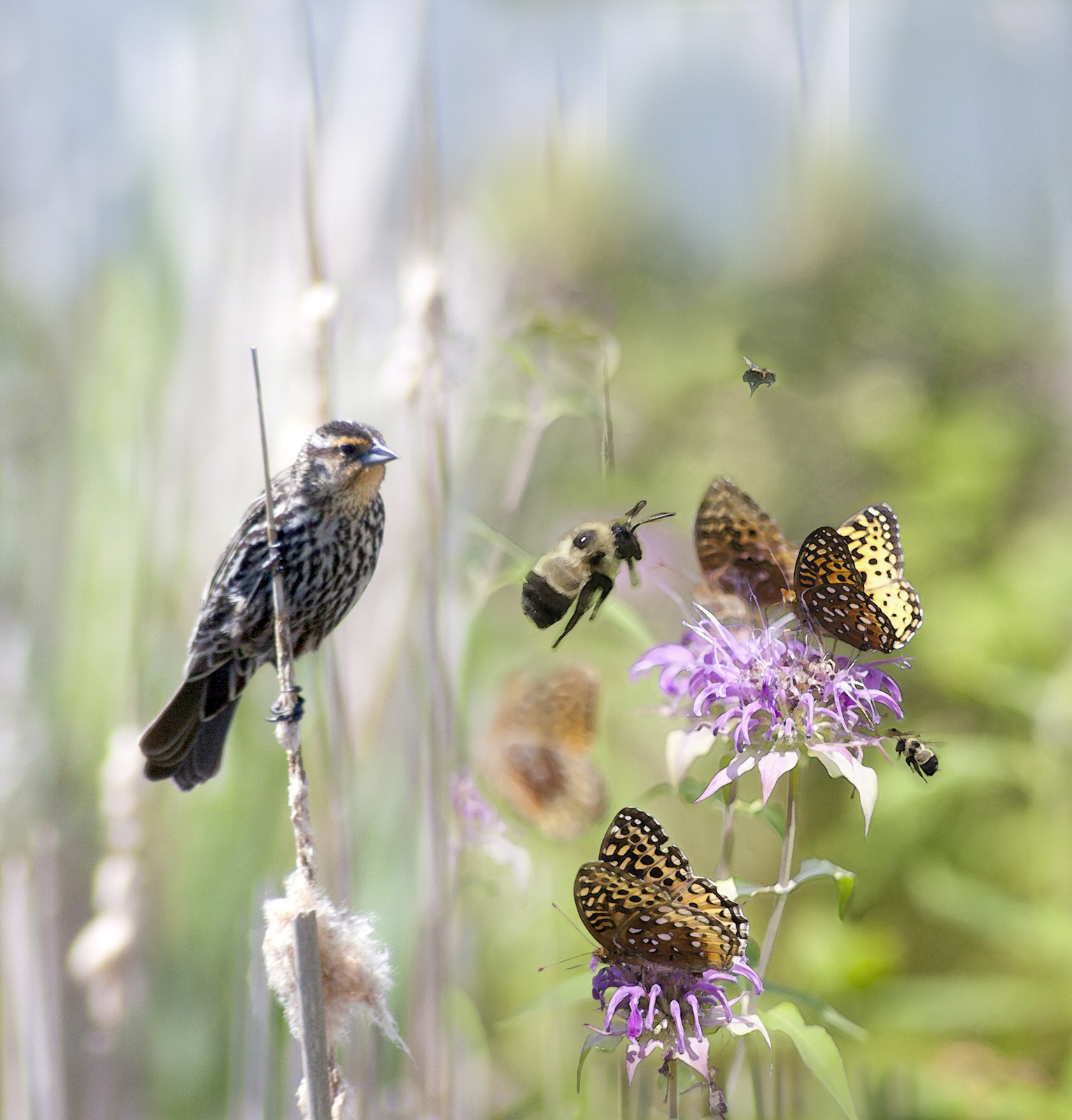 Invite Them In: Backyard Landscape for Pollinators (Virtual)