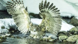 Owls of the Eastern Ice with Jonathan Slaght