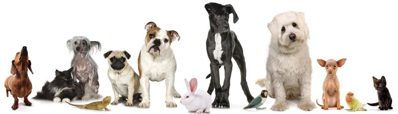 Virtual Pet Show & Tell - CANCELED