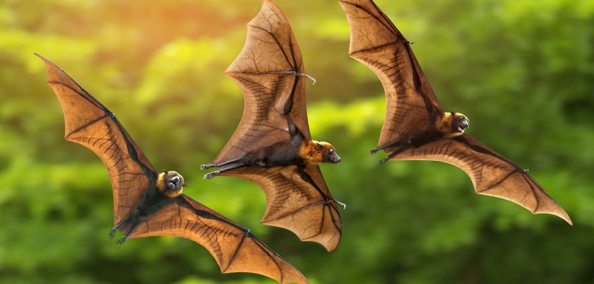 Adventures with Ms. Frizzle: Bats