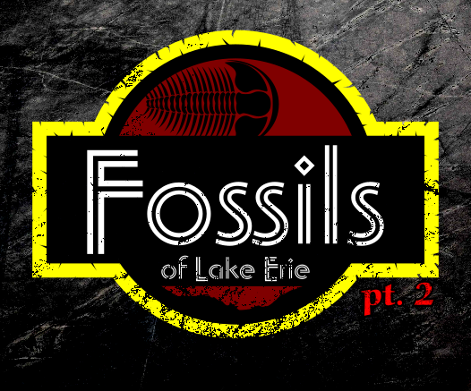 Fossils of Lake Erie - Part 2