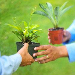 Perennial exchange