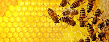 Virtual: Beginner Beekeeping Classes