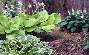 Virtual Low Maintenance Gardening