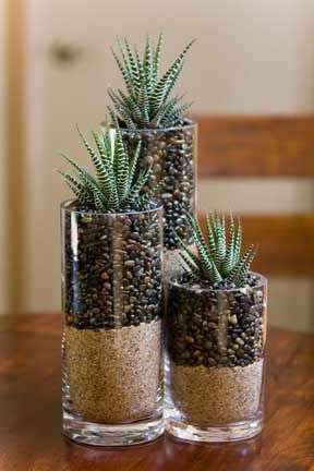 Make Layered Succulent Terrariums: Adult Creative Arts
