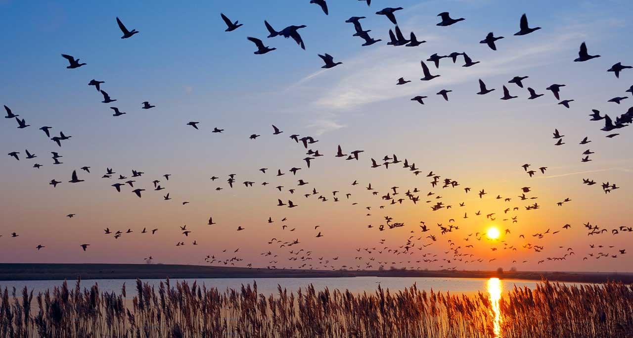 The Wonder of Bird Migration