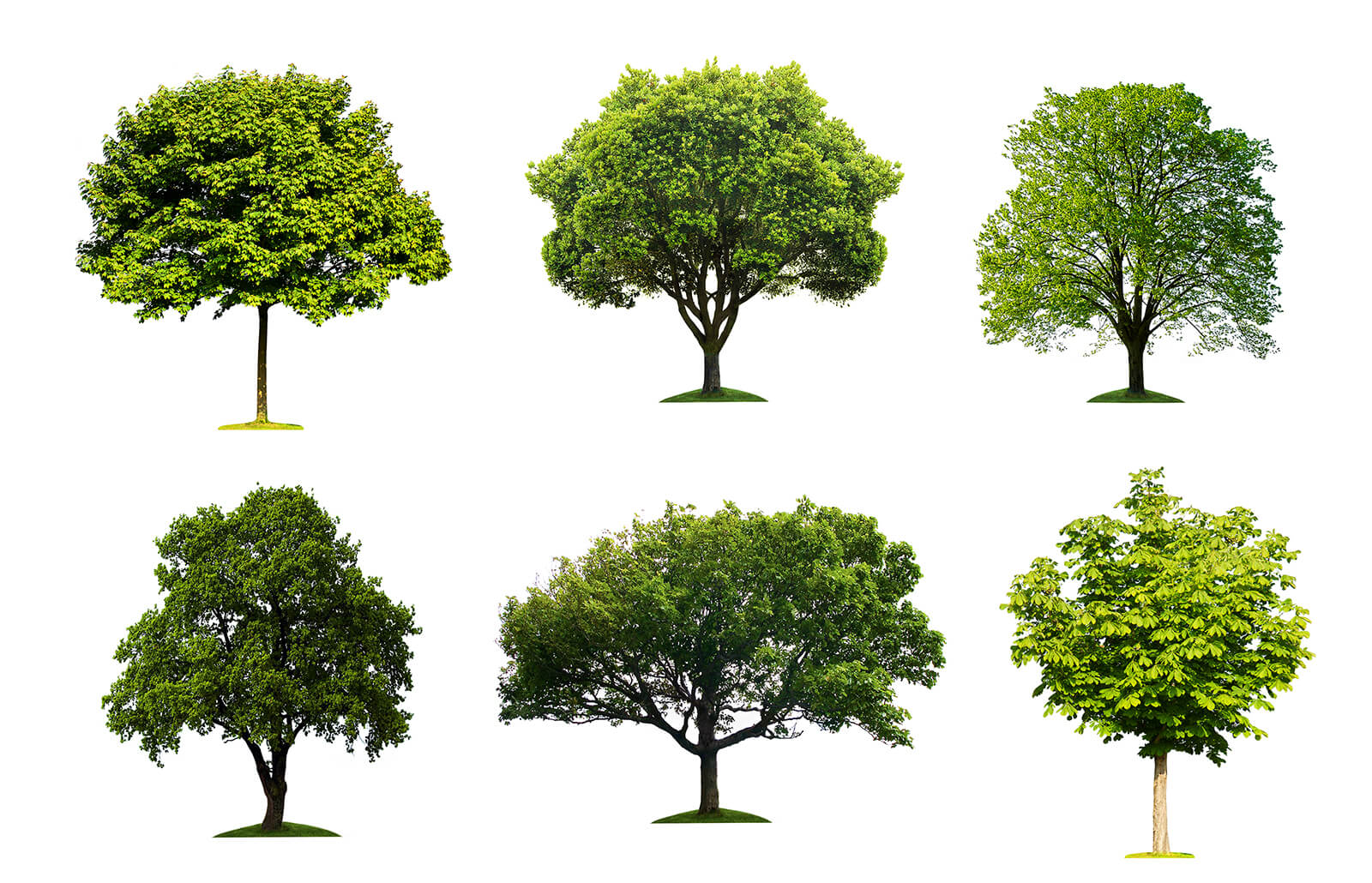 VIRTUAL - Demystifying Trees: Identify the trees in your yard