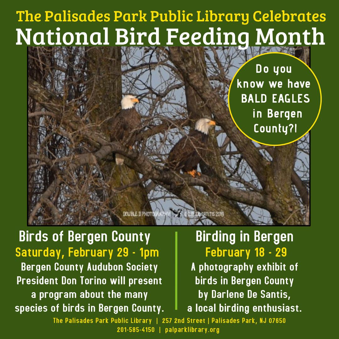 Birds of Bergen County