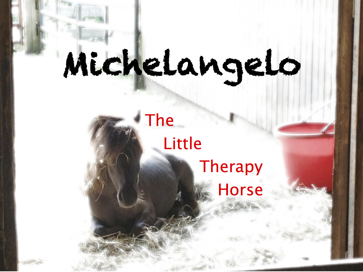 Michelangelo: the Miniature Therapy Horse (Online)