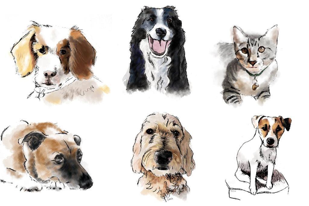Grab-N-Go Teen Paint Your Pet