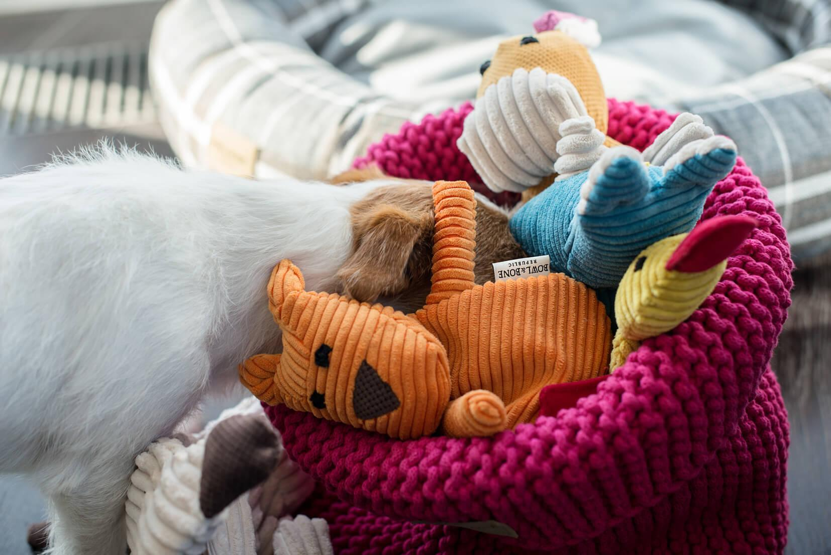 Make your own Dog or Cat Toy