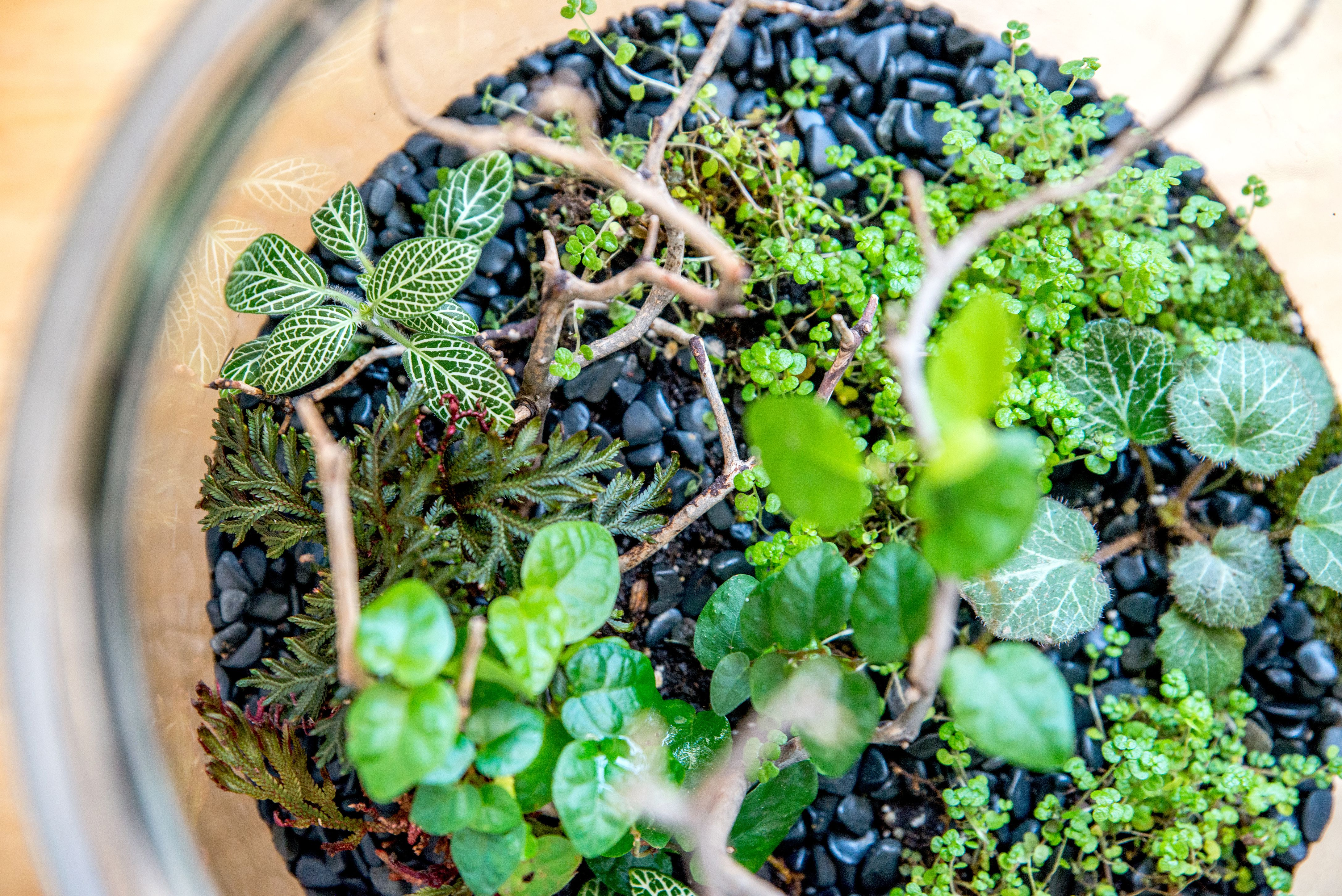 Do It Yourself Terrariums with Oak & Ivy (for Adults)