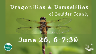 Dragonflies & Damselflies of Boulder County