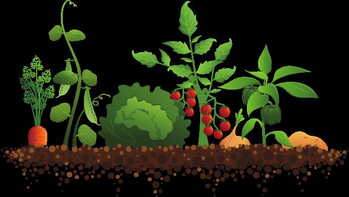 Master Gardeners Presentation: Gardening 101 Edible Gardens