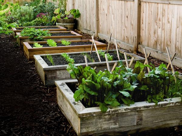 Master Gardeners Presentation: Gardening 101 Raised Bed Gardening