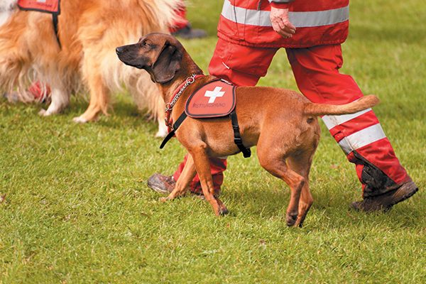 Super Powered Working Dogs Presentation