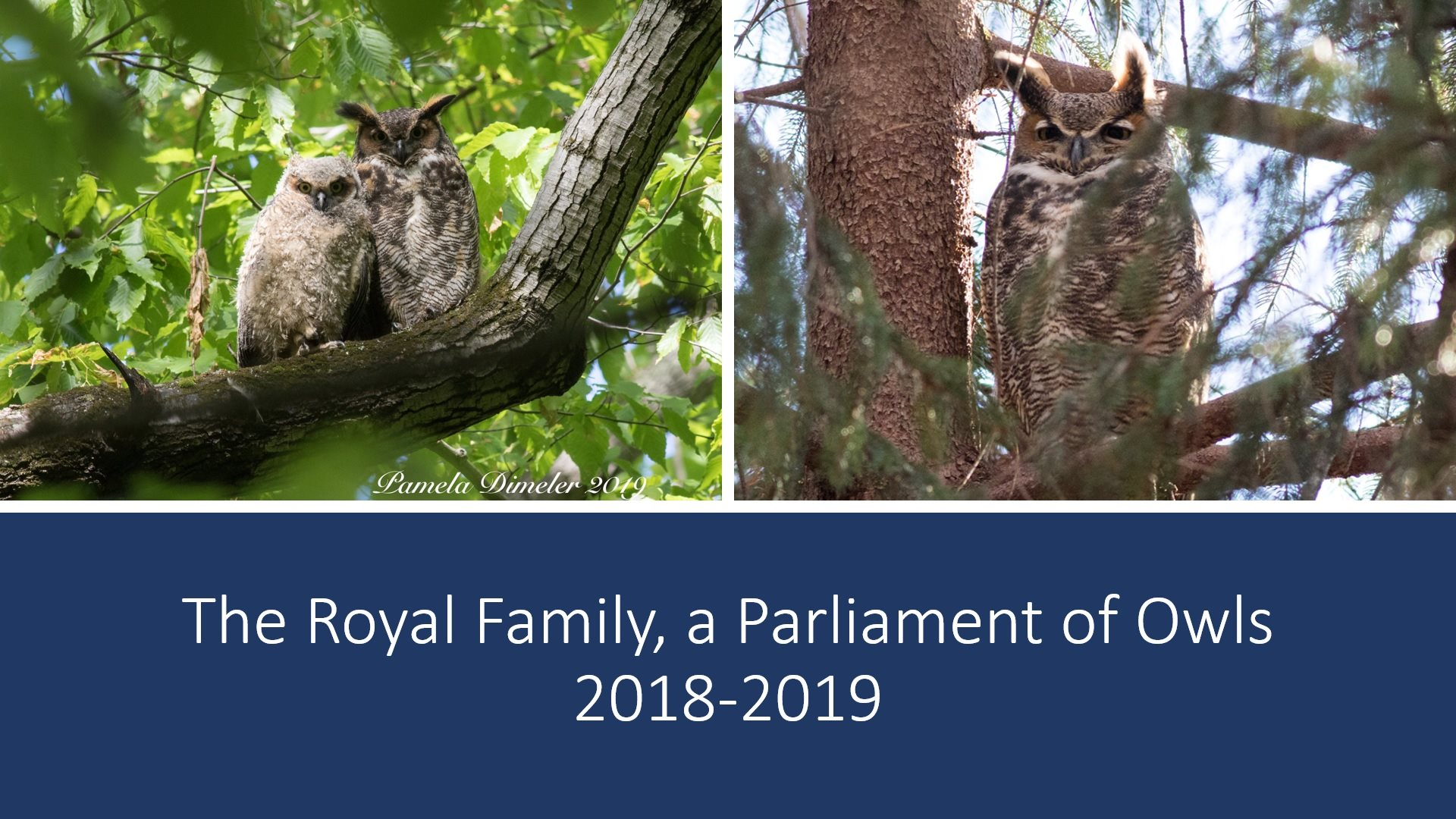 Owl Lecture: The Royal Family; A Parliament of Owls