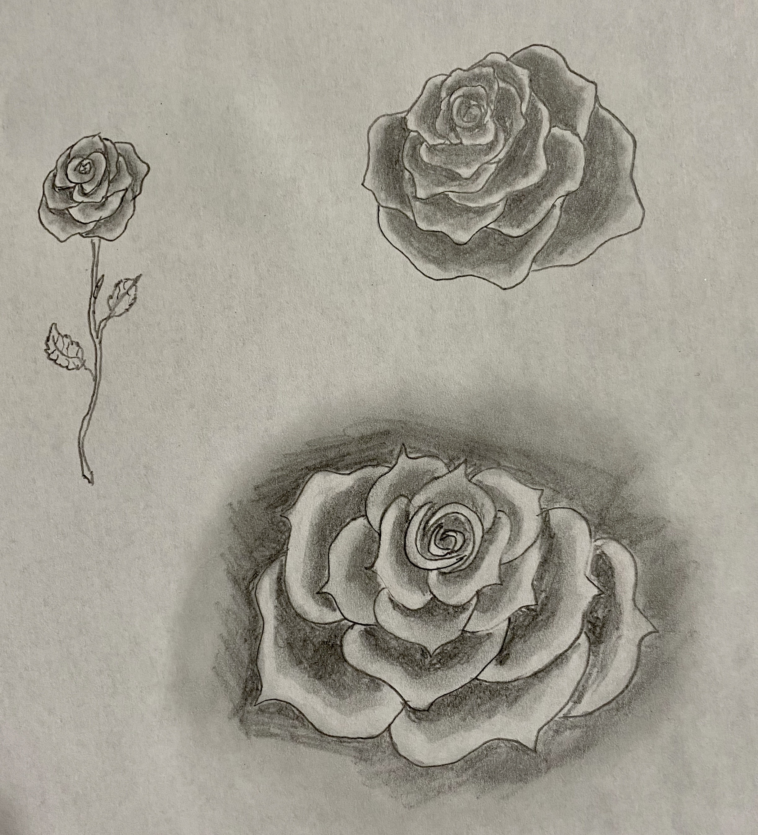 Virtual Drawing Lesson w/ Veronica Batter - Learn to Draw Roses