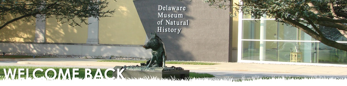 Delaware Museum of Natural History - Digging for Dinosaurs and Fossils