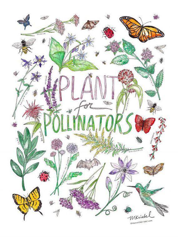 Your Backyard Pollinator Garden