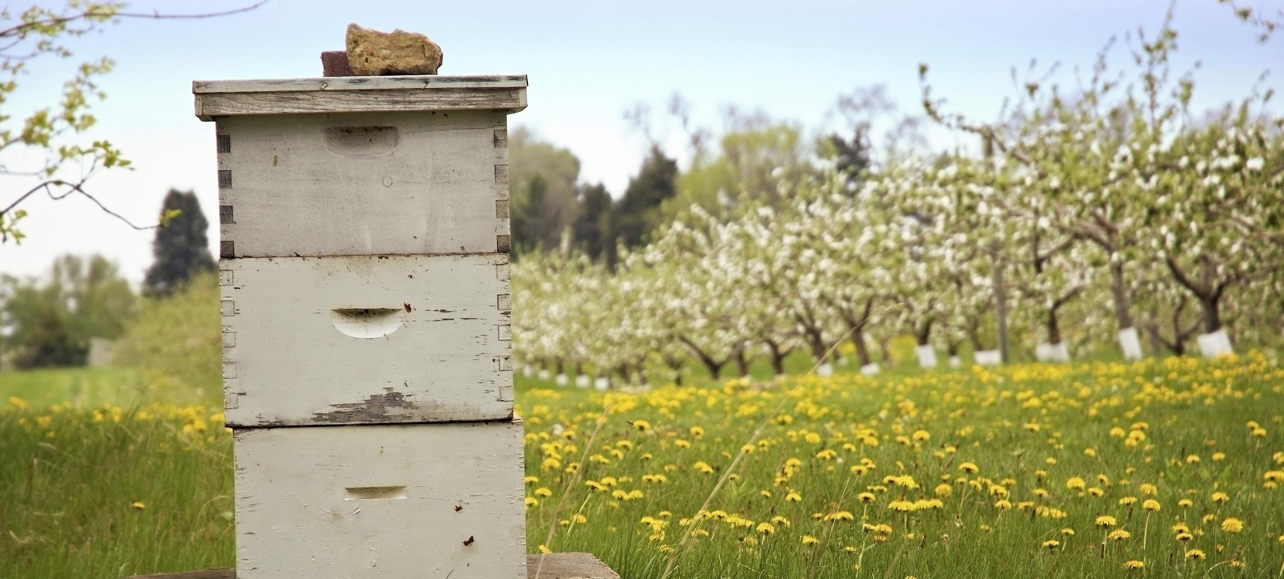 Upper Eastern Shore Beekeepers