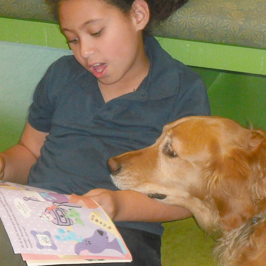 Read to a Dog:Sasha or Rusty-Fig Garden