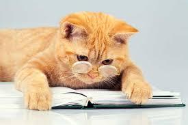 Cat Club: Naughty Cats!