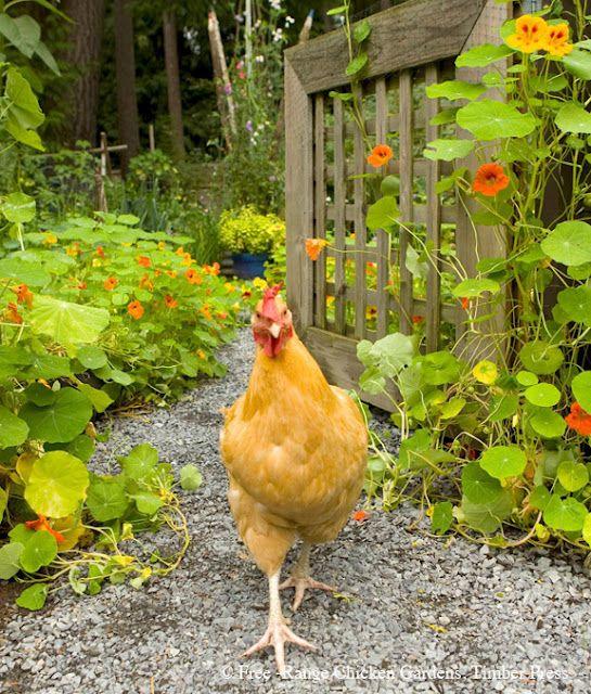 Sundays in the Garden presents Chickens in the Garden