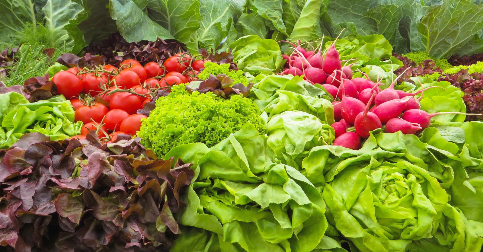 Sundays in the Garden: Vegetable Gardening for Everyone