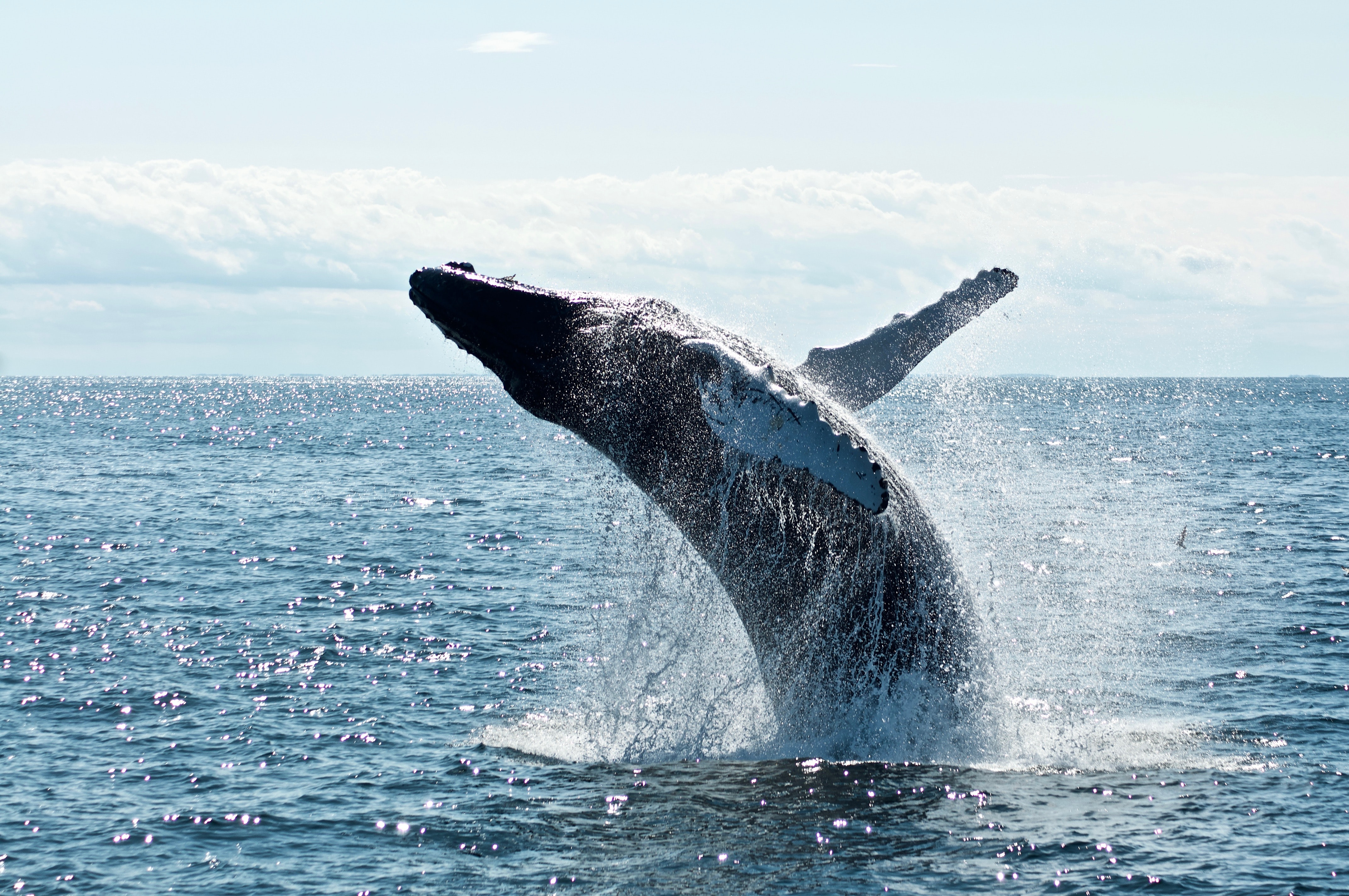 NEA Big Read: TED Talk, Whales