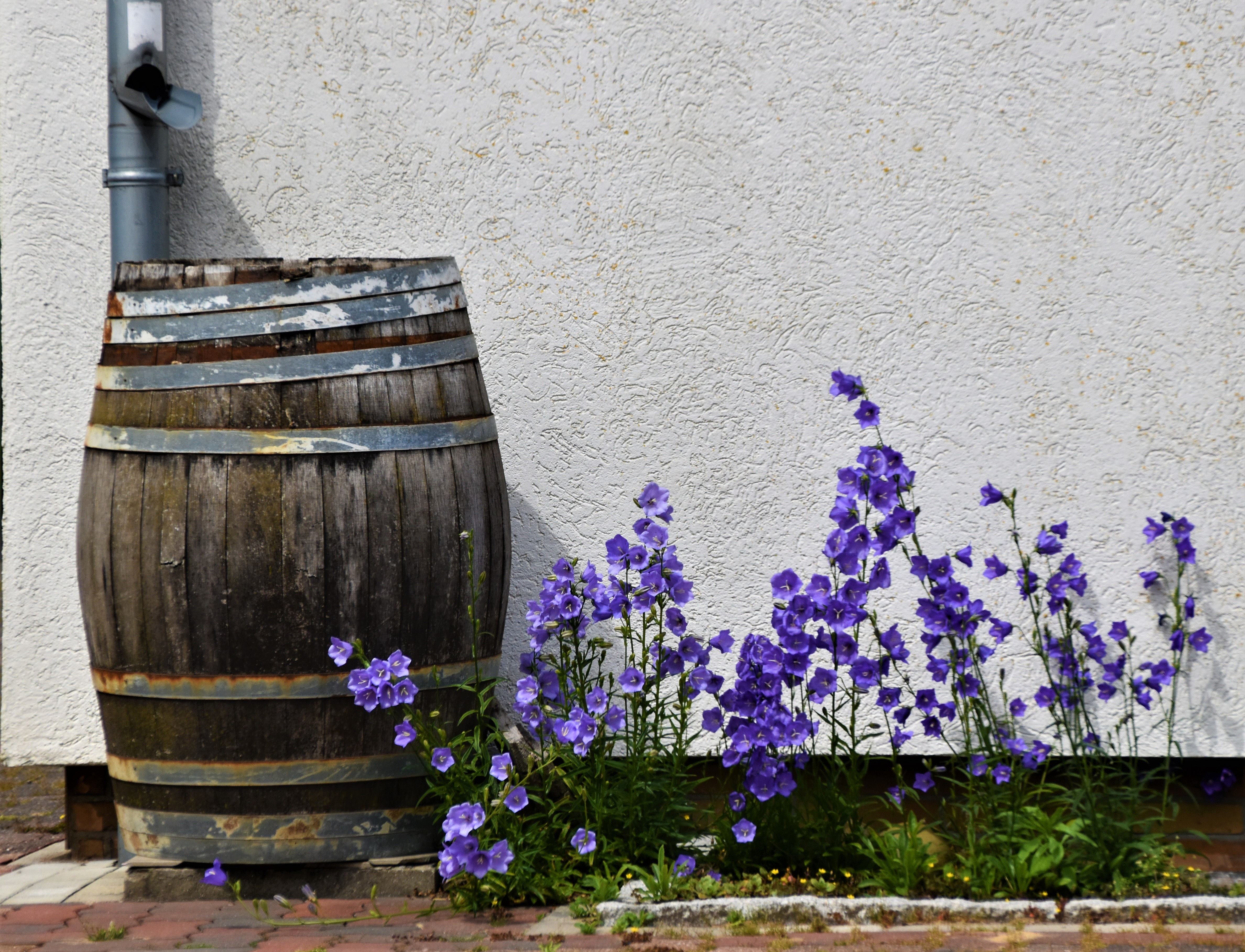 Improve Backyard Water Quality