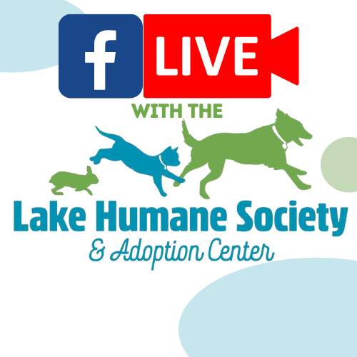 Facebook Live with the Lake Humane Society