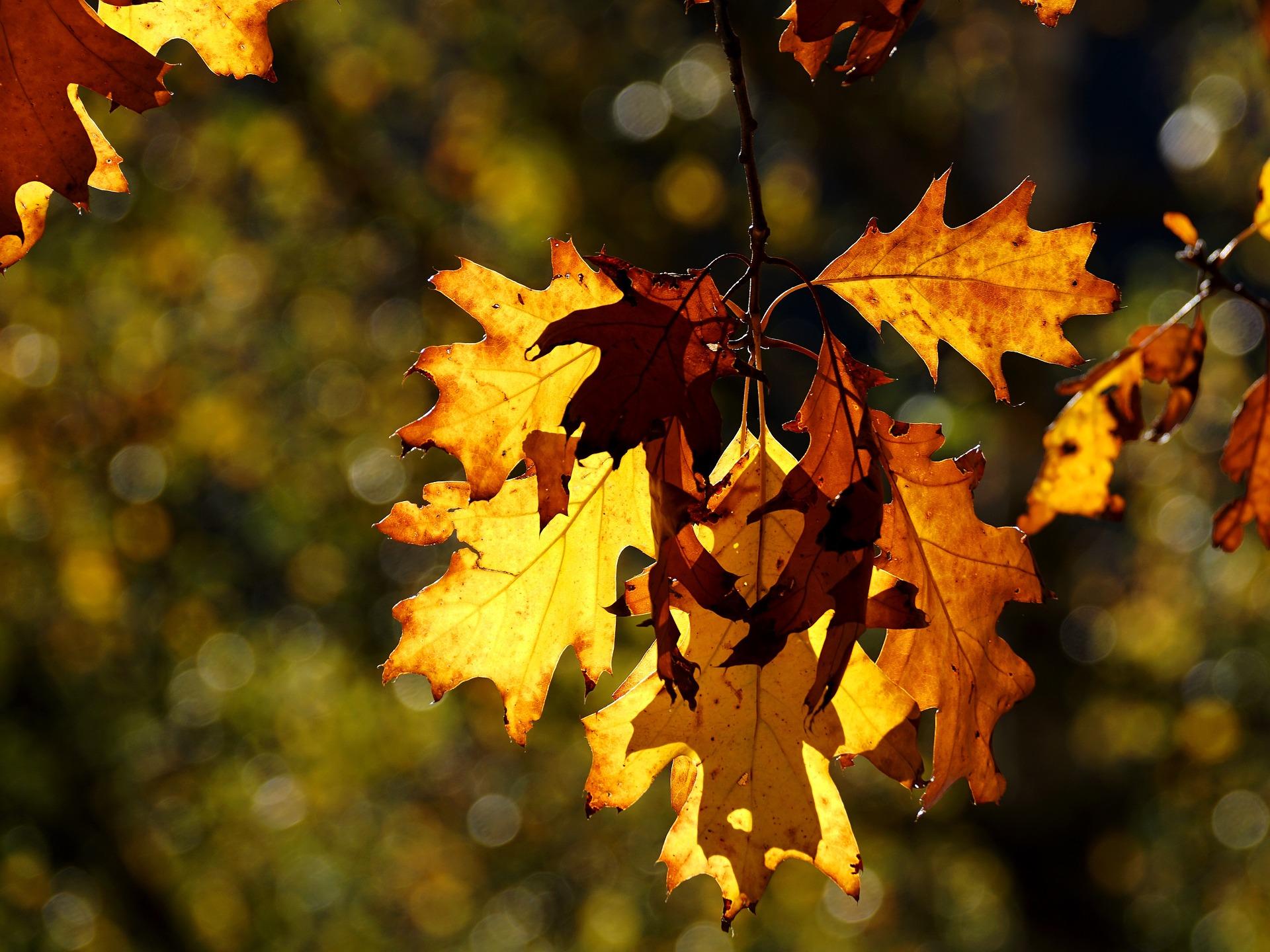 Wild Sun Catchers: Oak Trees